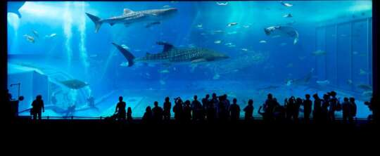 Jak należy dbać o akwarium, by cieszyć się zdrowymi rybami?