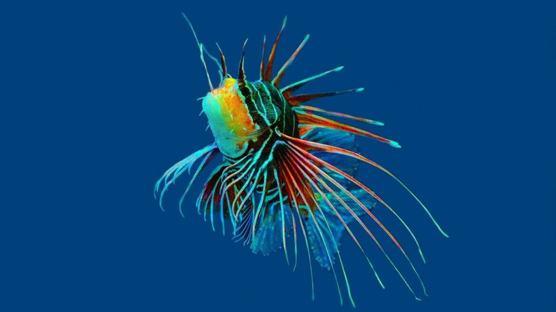 Akwarium morskie- niezbędny osprzęt