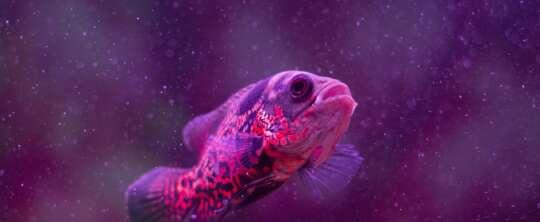 Zalety posiadania akwarium