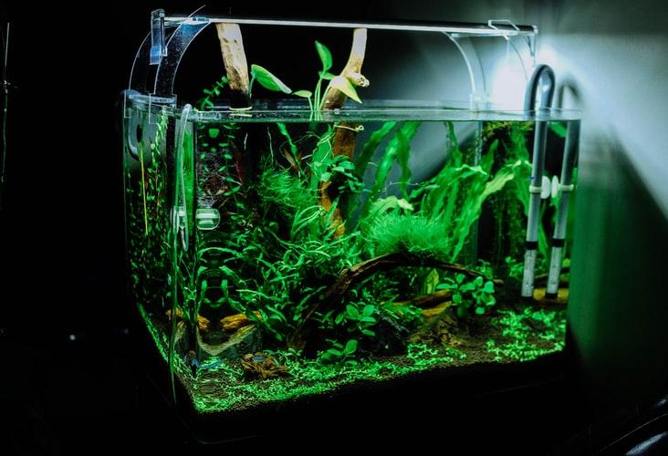 Aquascaping, czyli sztuka projektowania podwodnych ogrodów